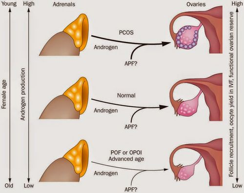 Pengobatan Hormon untuk mengatur perilaku dan fisiologi