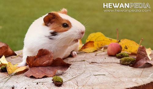 Perawatan Tetra Hewan Peliharaan Anda food dari pet shop dan