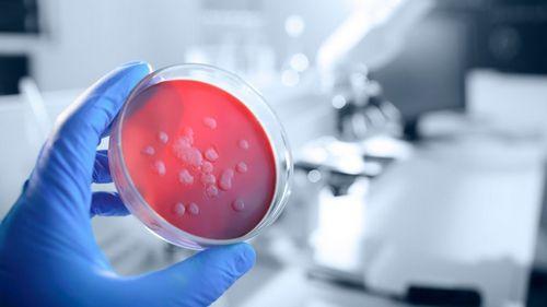 Virus Vs Bakteri - Apa Pengobatan Terbaik? tumbuh di permukaan kulit, dan